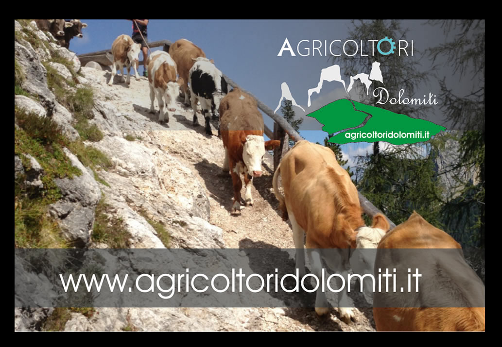 agricoltoridolomiti.it grafikpro